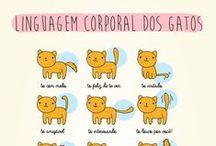 gatinhos (^-.-^) / GATINHOS, CATS, GATITOS(^-.-^)