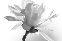 White! ~ / by Kriste Maurer Rutkowski