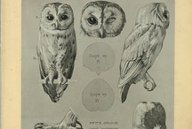 night owl. / owls. owls. and some. / by Darla Maxine