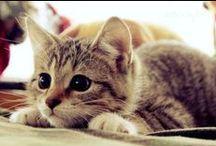 Kitties!!