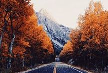 Autumn Glory