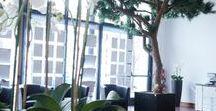 Végétaux sur-mesure d'Hydro Décor - ARBRAKIT® / De nombreuses possibilités de conception et création de végétaux à notre atelier, Hydrodecor a inventé le système Arbrakit® pour vous...