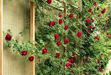 Nature's love ❤️