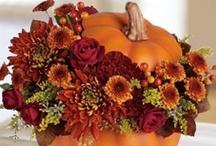 Fall / by Leeanne Hay