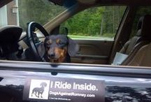 Remember / In memory of Molly Doodles, my doxie fur baby.  / by Jennifer Condrey