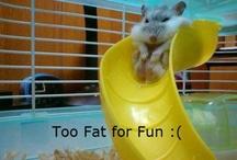 Tell me I'm funny! / by Sydney Segovia