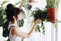 Urban jungle. / Grün, grün, grün sind (fast) alle meine Pflanzen! Verwandel deine Wohnung in eine grüne Oase.