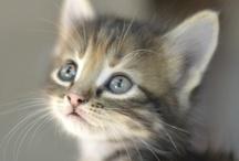 Animal Cutie Pies / by Darling Saedi
