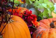 Beautiful: Autumn for  Me / by Deniport