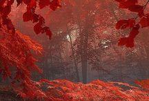 nature / by Donna Juren