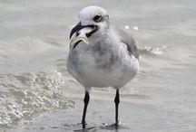Jacksonville Beach, Florida / by Deborah Goulekas