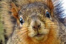 Animals- Crazy Squirrels / by Deniport