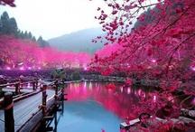 amazing outdoors