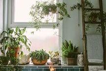 Home: Plants