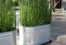 Patio Plant Screens / Privacy screening for my townhouse patio / by Susan Gaston