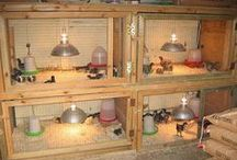 DIY Chick Brooders / No need to buy a brooder for your baby chicks - just find a plastic tote or an old bureau or dresser and start creating!