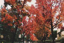hey, autumn