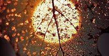 Φθινόπωρο / Εποχες