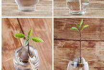 Plantes&Co