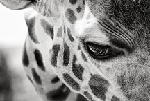 Animal world / by Isabelle Trudeau