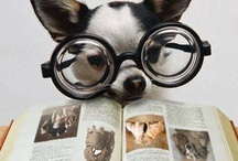 Furry Readers / Because who doesn't love a cute animal reading? ;)