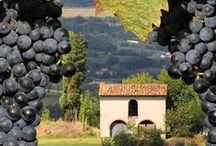 Wine in Europe / Discover the best wine in Europe, photos of vineyards, different wines and the best places to dirnk them, curated by the Europe a la Carte Travel Blog.