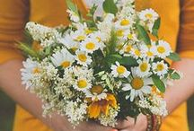 Daisies and such / Daisies are beautiful. They are my favorite flower :] along with tulips and carnations.  / by Lauren Emerson