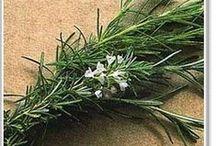 Gardening - Herbs / by Lynette Bondietti