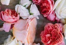 Bloom / by Tracy Fenn