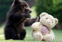 Sic em Bears!!! / by Katherine White