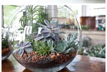 Great Ideas / A collection of ideas that I will utilize once I move into my apartment...