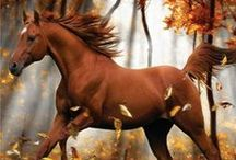 HORSES / by Lynn