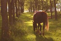 Equus / by Nicole