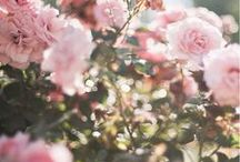 INSPIRE || flowers and flora / beautiful, delicate, colorful and temporary