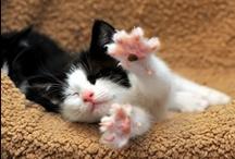Cute, Cute, Cute!! / by Heather Chase