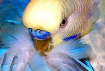 Budgies - General / Pictures of different budgies - fun, pretty or just interesting.