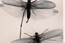 insectoids / by Erin O'Brien