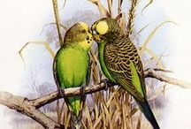 Budgie Art and Crafts / Art and crafts that include budgies.