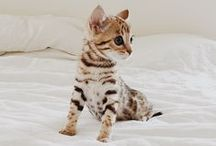 Cute Animals / by B&C Designers