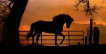 horses are my most favorite animals