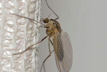 Para elimar mosquitos