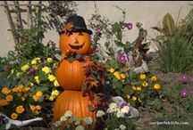The Pumpkin Holiday