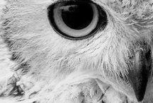 A Googol of Owls & A Couple of Dinos