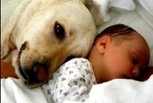 """How Sweet / Things that made me go""""awwww"""". / by Paula Snoddy"""