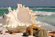 Beachcomber Booty / Things I'd love to find on the beach. / by Paula Snoddy