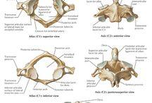 Santé-Ostéopathie