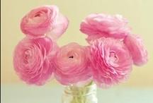 In Bloom / by Gae Watson