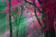 ART - Photography (Mother Nature) / by Jennifer Chapa