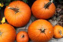 Season: Fall / by Oh My! Creative