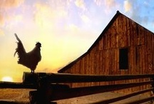 raising chickens / by Michelle Sutton
